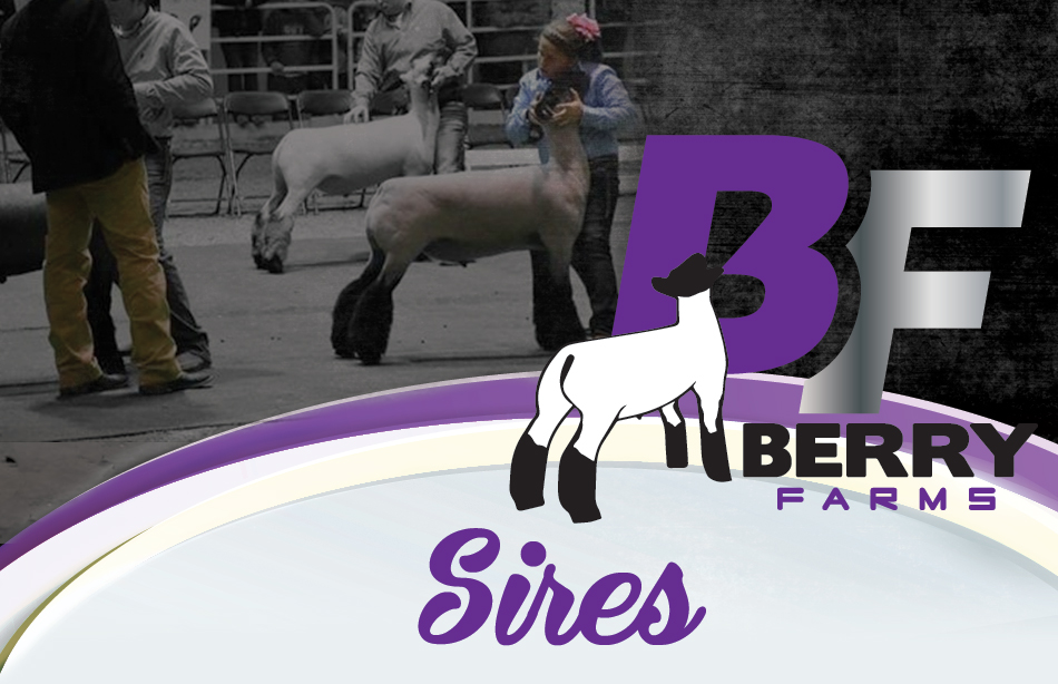 Berry Farms - Sires